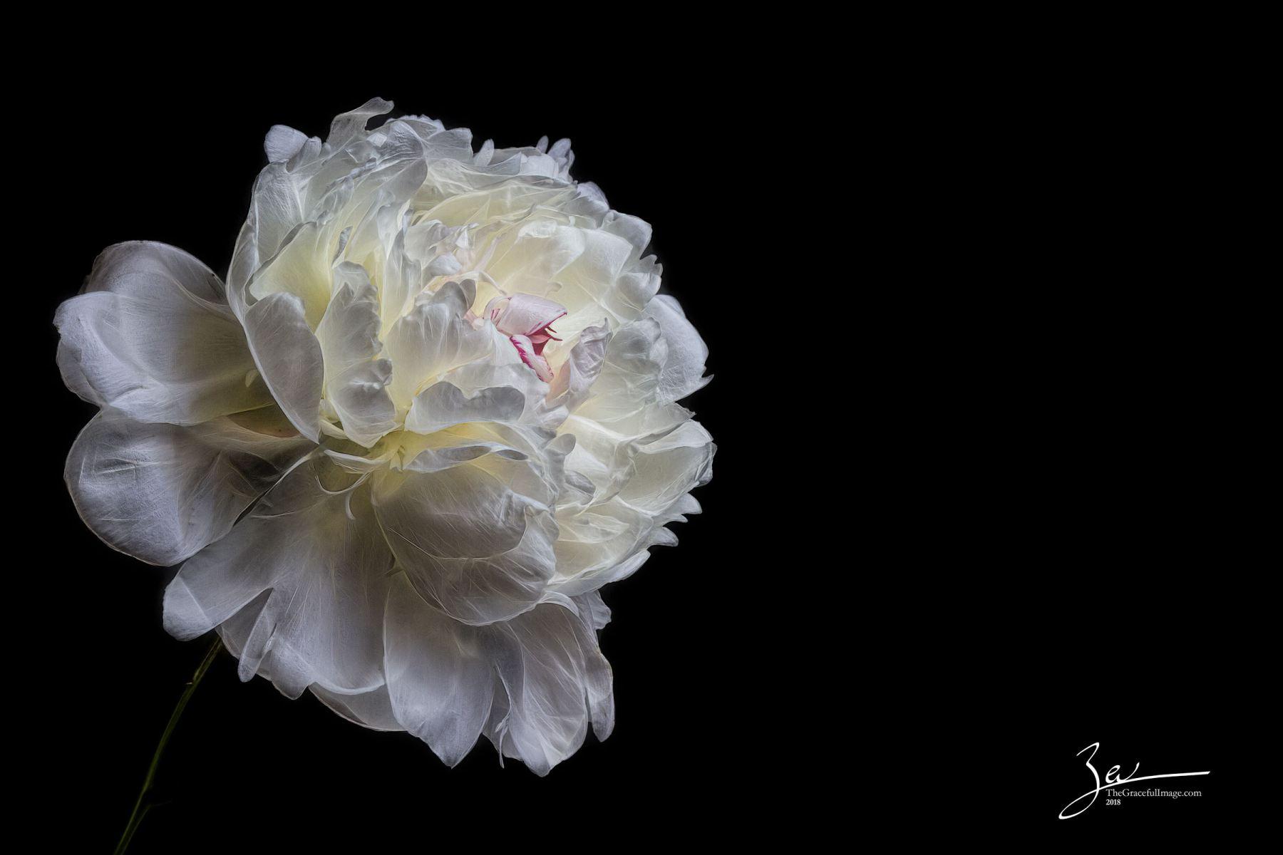 20180527_Flowers-45-wm
